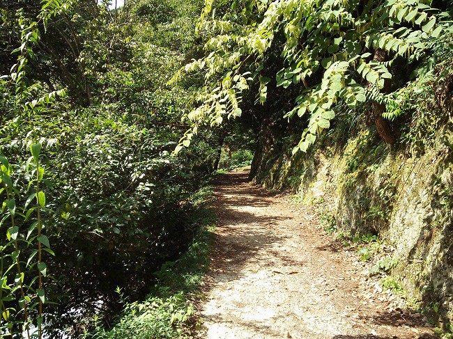 草木のしげる道