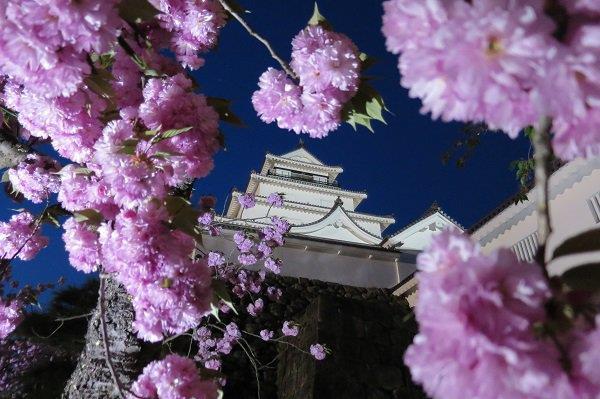 鶴ヶ城の夜桜