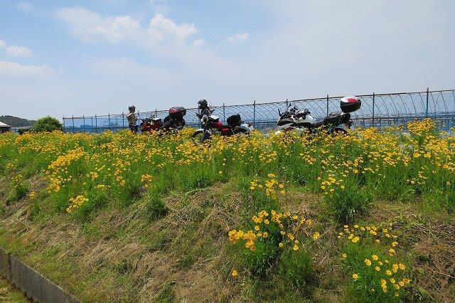 綺麗な花とバイク