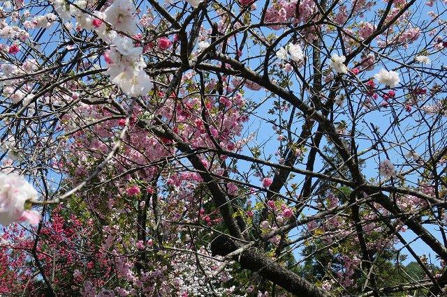 白とピンクの花